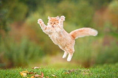 Mitos sobre animais de estimação: os gatos sempre caem de pé