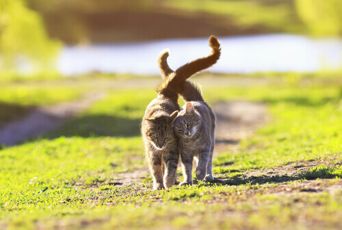 Gatos se conhecendo