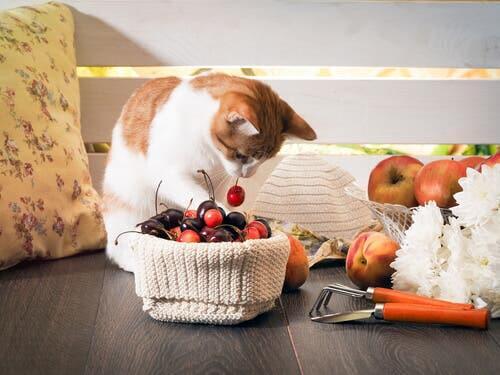 E as melhores frutas para os gatos?