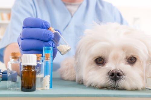 Homeopatia: medicina alternativa para os animais de estimação