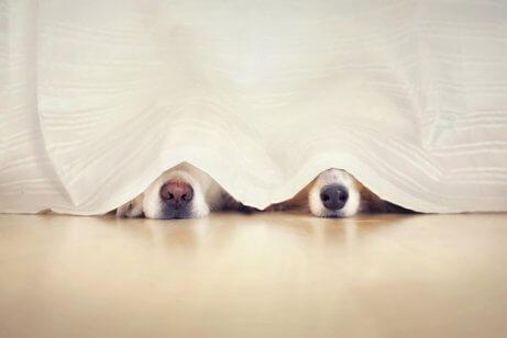 Jogos interativos: esconde-esconde