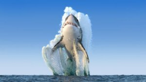 Os 4 maiores tubarões do mundo