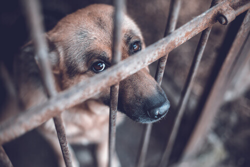 denunciar uma organização de proteção animal