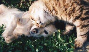 Oito mitos sobre animais de estimação