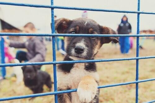 Como denunciar uma organização de proteção animal?