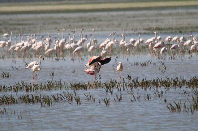 Parques naturais da Espanha: Doñana