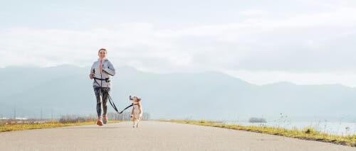 exercícios com os cães