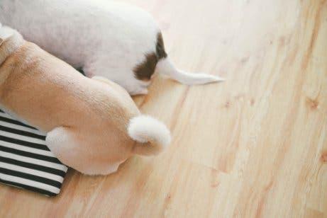 Se um cachorro abana o rabo, ele está feliz