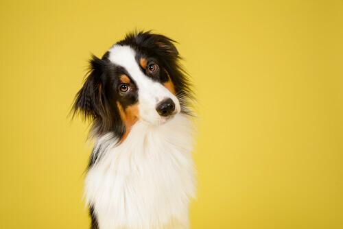 Como reconhecer uma raça de cachorro?