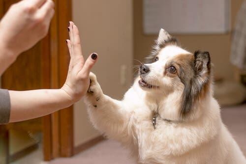 reforço positivo em cães