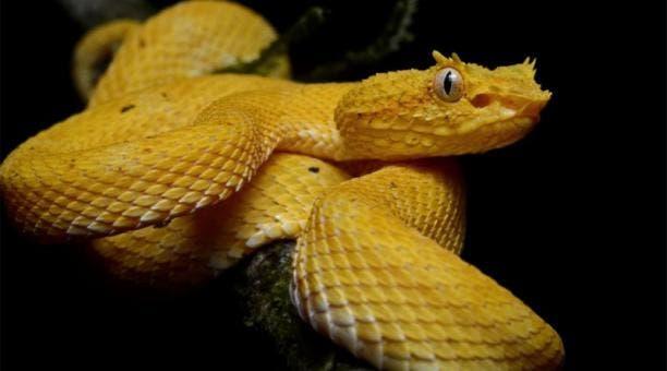 Descubra a ilha das cobras