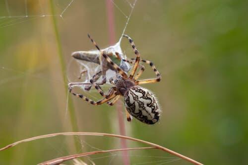 3 técnicas de caça das aranhas