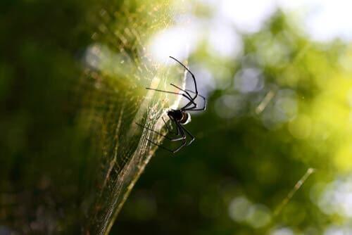 As 3 técnicas de caça das aranhas