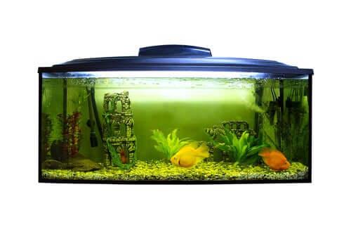 Como o pH afeta os peixes?
