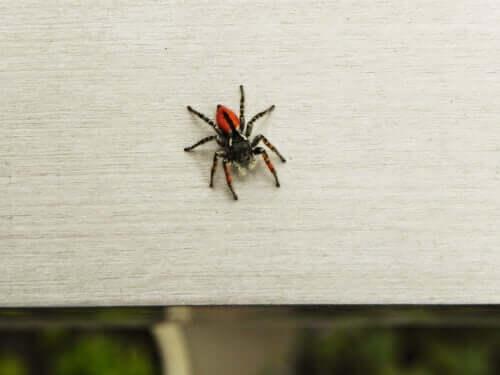 Medo de aranhas: como superar?