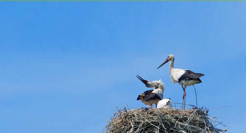 As aves da boa sorte