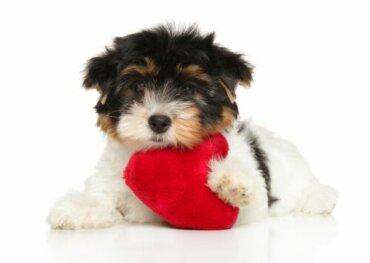 Seis dicas para o cuidado do coração dos cães