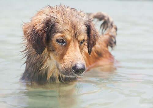Três dicas para prevenir a leptospirose em animais de estimação
