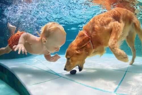 Natação para cães: tudo o que você precisa saber