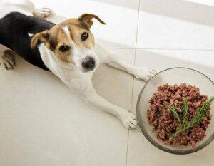 Os cães são carnívoros?