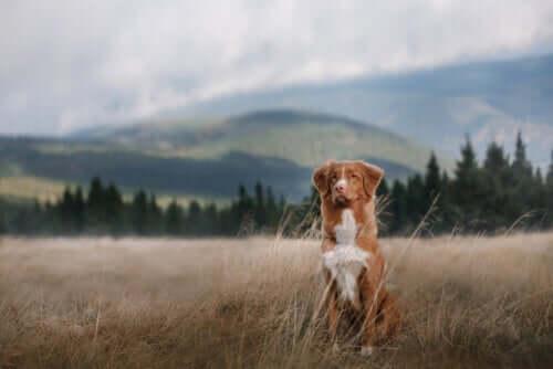 Prepare a 'mala' do seu animal de estimação