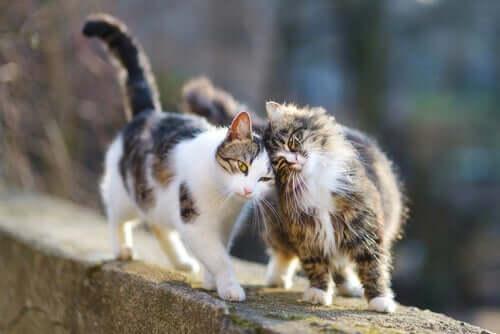 o microchip em gatos