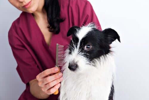 Dicas para cuidar da pelagem dos cães