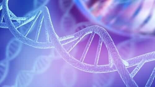 Genética e populações animais