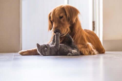 Choque em cães e gatos