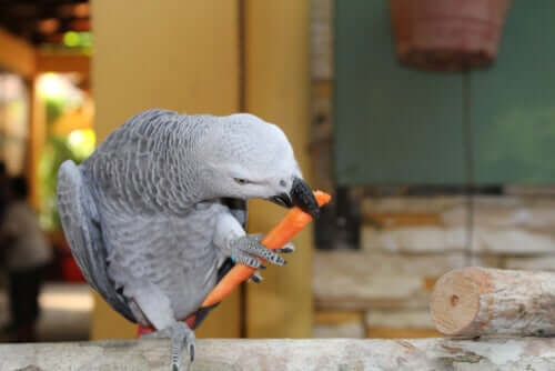 As incríveis habilidades cognitivas dos papagaios