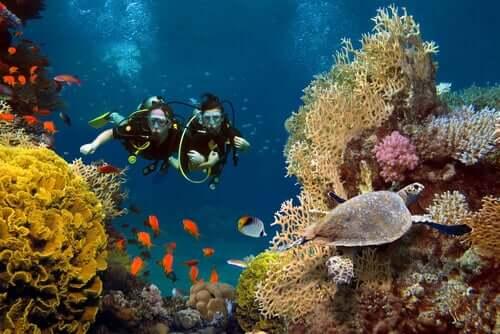 Corais e algas microscópicas