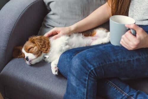 Meu animal de estimação está inconsciente: o que pode ter acontecido?