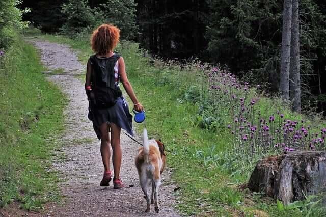 Cinco dicas para acampar com um cachorro