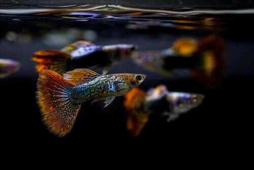 A importância do pH no aquário