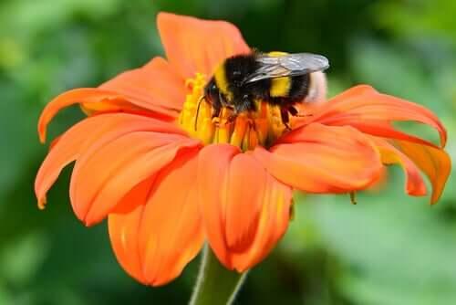 Animais polinizadores e plantas: uma simbiose ancestral