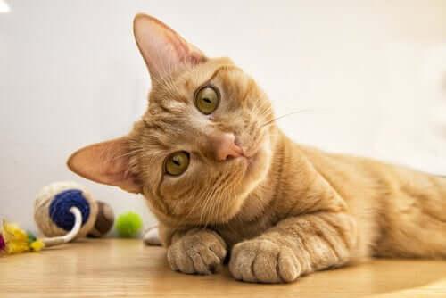 Os gatos têm uma capacidade notável de aprender com as experiências