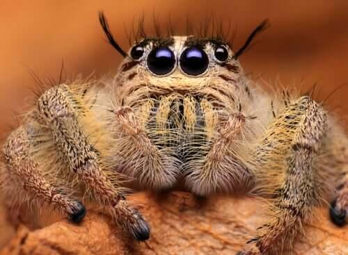 Superar o medo de aranhas