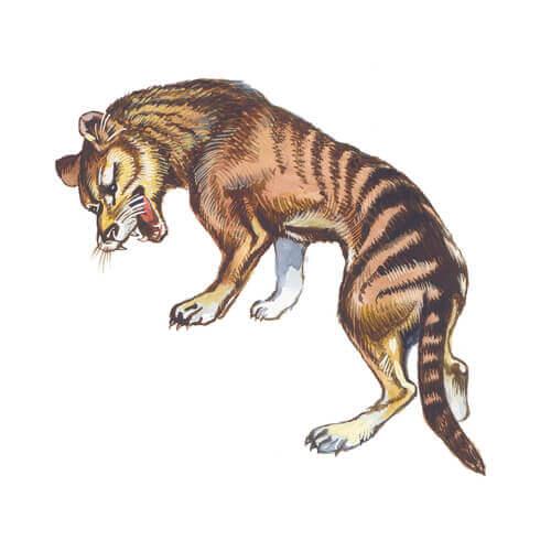 Características do tigre-da-tasmânia