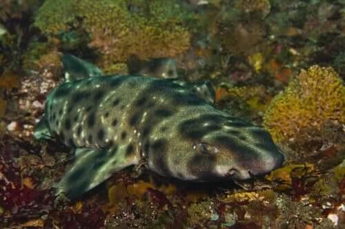 O segredo dos tubarões que brilham no escuro