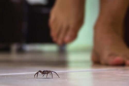 É comum essa aranha habitar o ambiente humano?
