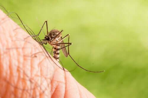 Origem e distribuição do Aedes albopictus
