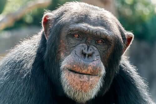 Novas descobertas sobre o Alzheimer em animais