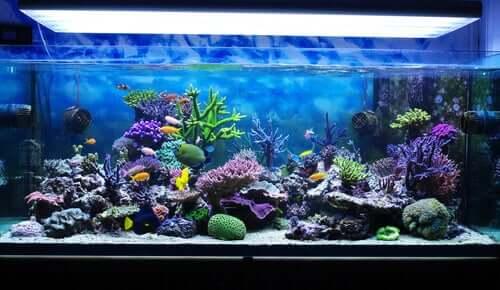 Um aquário marinho em casa: majestosidade com vários cuidados