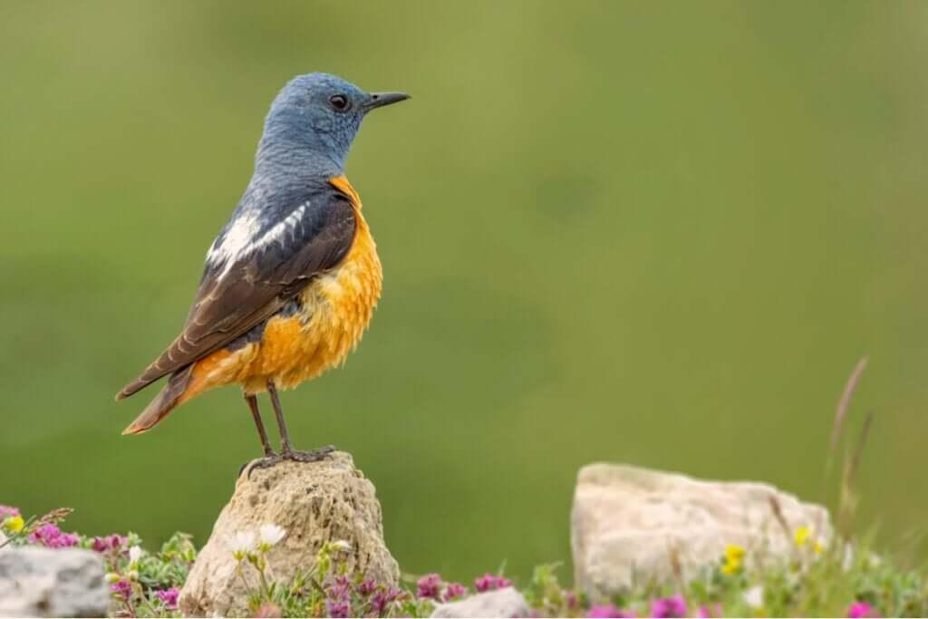 A fauna do Parque Nacional de Guadarrama