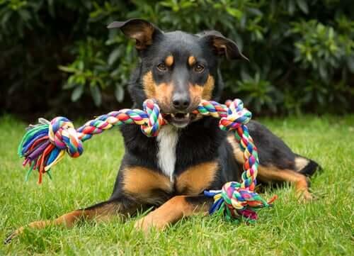 4 objetos ou brinquedos que não são adequados para os cães