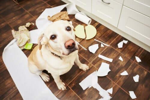 objetos ou brinquedos que não são adequados para os cães