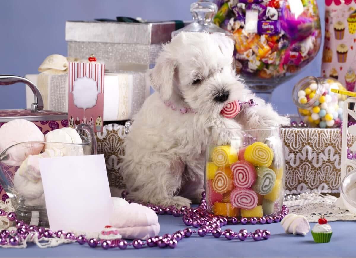 Os doces são perigosos para os cães