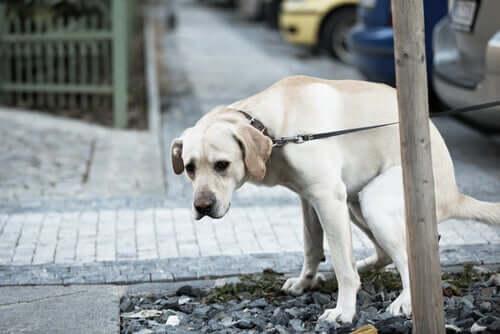 Problemas digestivos em cães: tratamento e prevenção