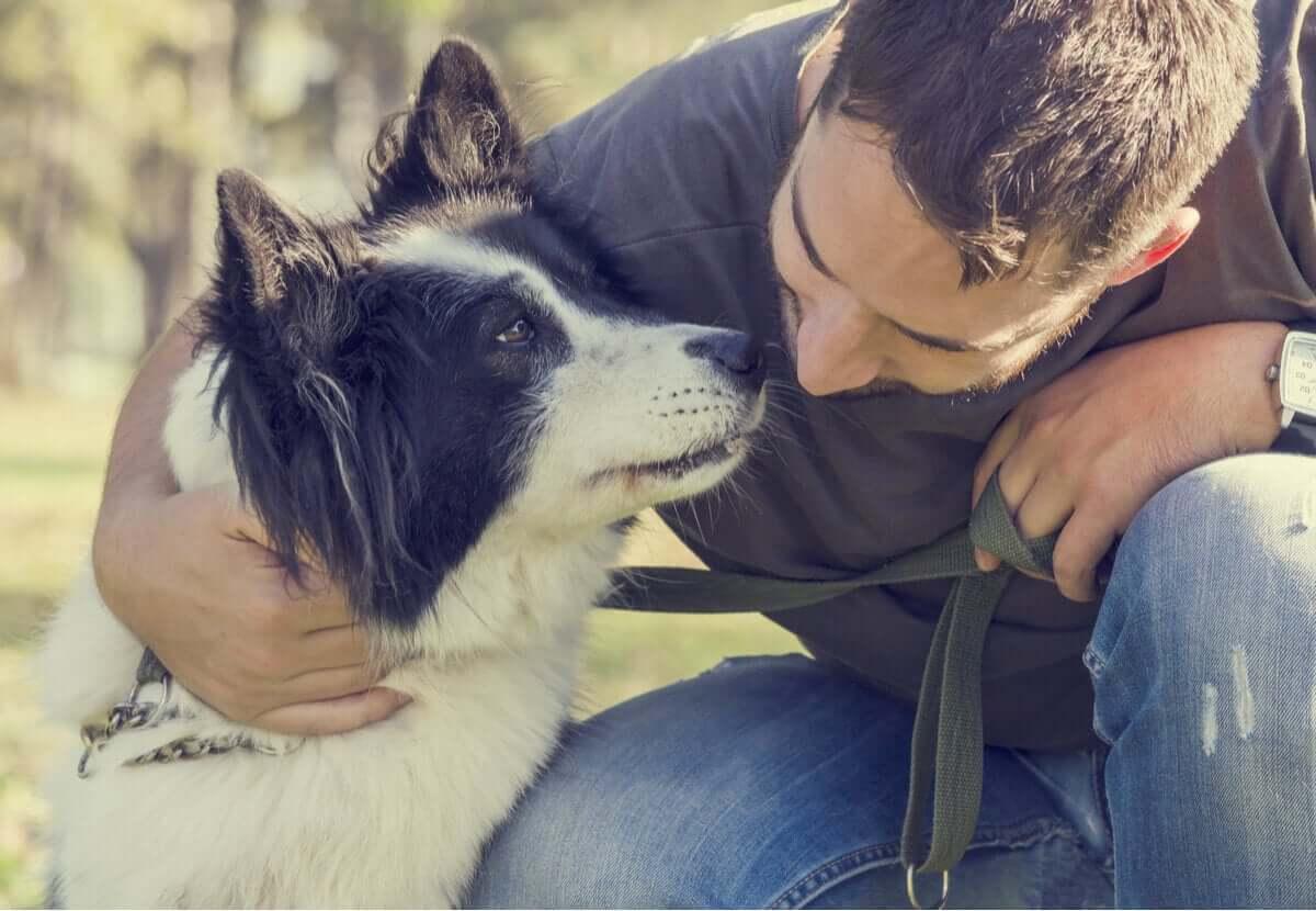 Três doenças reprodutivas que um cachorro pode ter