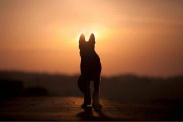 Os cães são conscientes da morte?